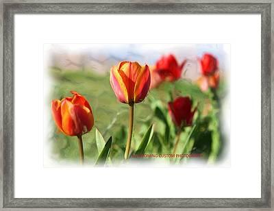 Spring Tulips Framed Print