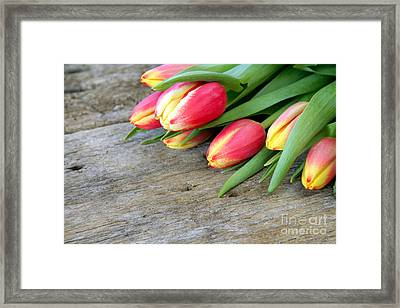 Spring Tulips Framed Print by Darren Fisher