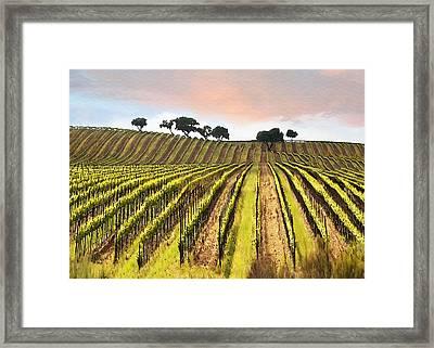Spring Vineyard Framed Print