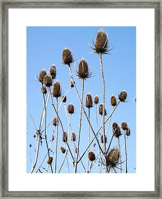 Framed Print featuring the photograph Spring Weeds 2 by Gerald Strine
