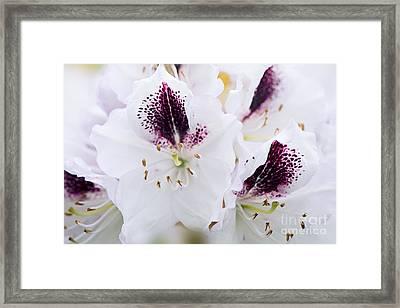 Spring White Framed Print by Jacky Parker