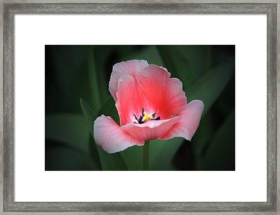 Springing Open Framed Print