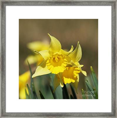 Framed Print featuring the photograph Springing Spring by Julie Clements