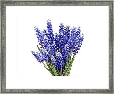 Framed Print featuring the photograph Springs Flowers  by Aleksandr Volkov