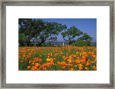 Springtime At Stanford Framed Print