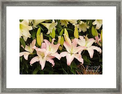 Springtime Blossoms Framed Print by J Jaiam