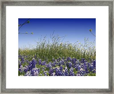 Framed Print featuring the photograph Springtime Bluebonnets by Lynnette Johns