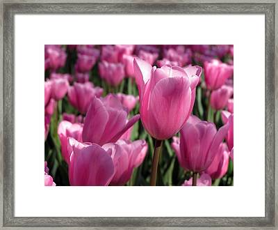 Framed Print featuring the pyrography Springtime Impression Tulips by Darleen Stry