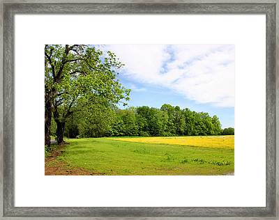 Springtime In Franklin Framed Print