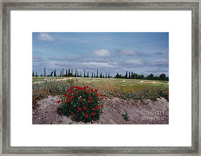 Springtime In Spain Framed Print by Barbara Plattenburg