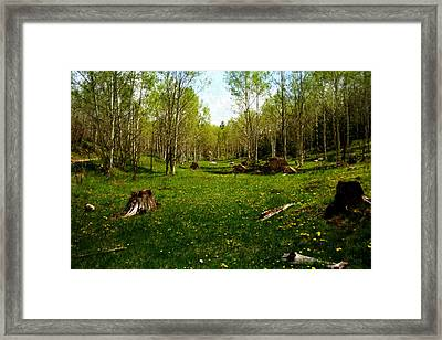 Springtime In The High Country Framed Print by Ellen Heaverlo
