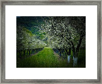 Springtime In The Orchard II Framed Print by Bill Gallagher