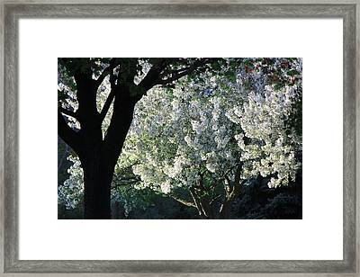 Springtime In Wisconsin Framed Print by James Hammen