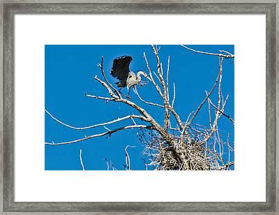 Springtime Nesting In Colorado Framed Print