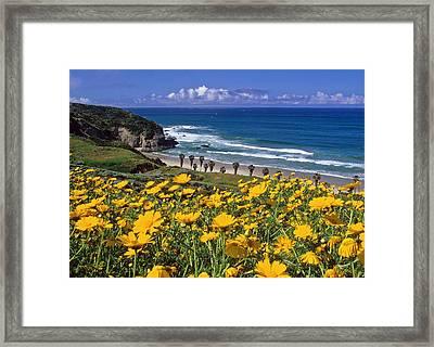 Springtime On The Headlands Framed Print