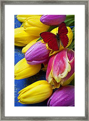 Springtime Tulips And Red Butterfly Framed Print by Garry Gay