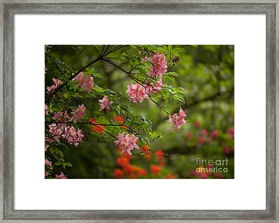 Sprinkled Amongst Framed Print by Mike Reid