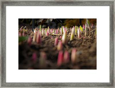Sprout Forest Framed Print