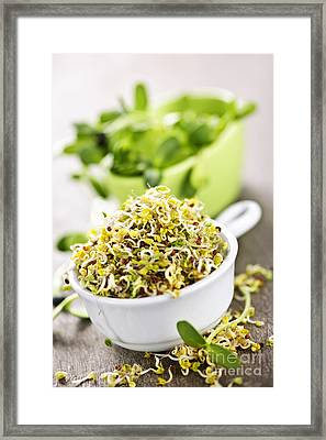 Sprouts In Cups Framed Print by Elena Elisseeva