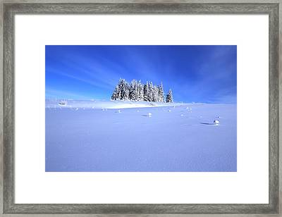 Spruce Grove In Winter Framed Print