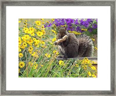 Squirrel   Framed Print by Amalia Jonas