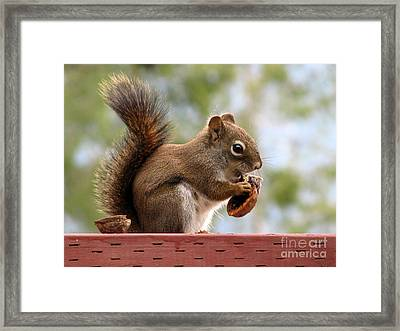 Squirrel And His Walnut Framed Print by Leone Lund