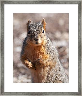 Framed Print featuring the photograph Squirrel by Art Whitton
