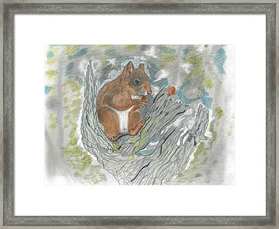 Squirrel Framed Print by Don  Gallacher