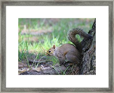 Framed Print featuring the photograph Squirrel Hiding In The Grass by Roena King