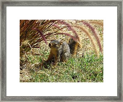 Squirrel In The Grass Framed Print by Bonnie Muir
