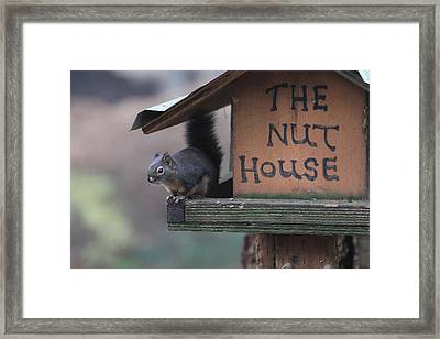 Squirrel In The Nut House Framed Print by Sam Amato