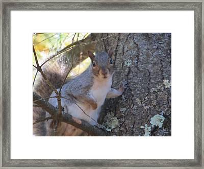 Squirrel In Tree Framed Print by Pamela Turner