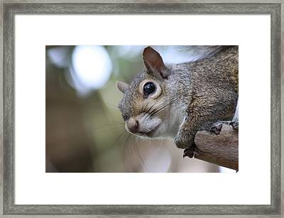 Squirrel Framed Print by Jeanne Andrews