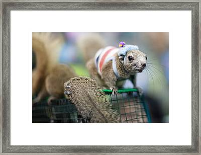Squirrel Framed Print by Kunstgalerie Aquarius
