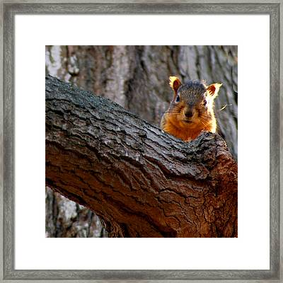 squirrel Last Stand Framed Print by LeeAnn McLaneGoetz McLaneGoetzStudioLLCcom
