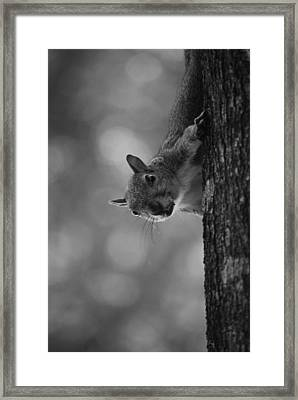 Squirrel On A Tree Framed Print by Carrie Munoz