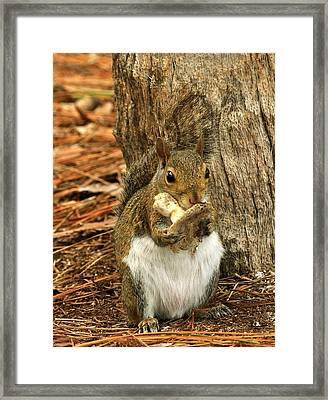 Squirrel On Shrooms Framed Print