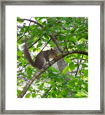 Framed Print featuring the photograph Squirrel With Candy by Renee Trenholm