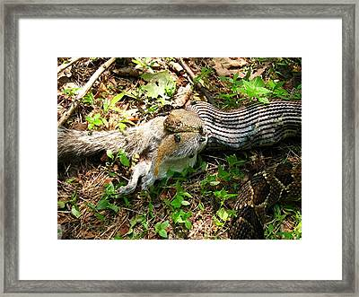 Framed Print featuring the photograph Squirrel's End by Doug McPherson