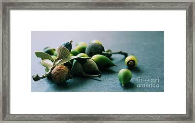 Squirrel's Harvest Framed Print