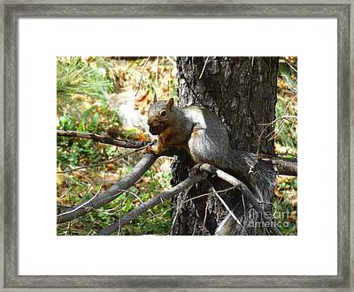 Squirrling Away Framed Print