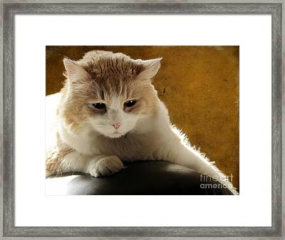Squishy Framed Print