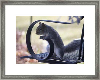 Sqwirl Framed Print