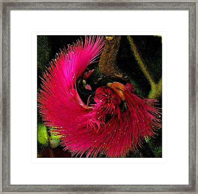 Framed Print featuring the photograph St Kitts Flora by Cindy Manero