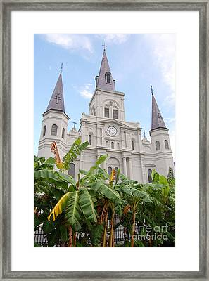 St Louis Cathedral Rising Above Palms Jackson Square French Quarter New Orleans Print  Framed Print by Shawn O'Brien