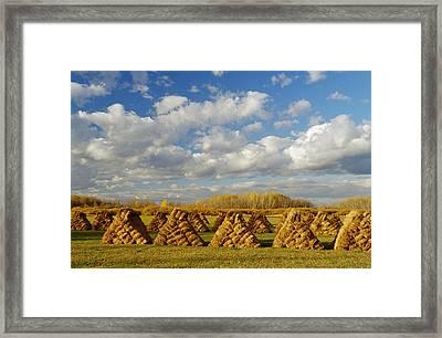 Stacked Hay Bales In Field, Selkirk Framed Print by Dave Reede