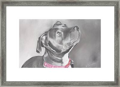 Staffordshire Terrier  Framed Print by Karl Simpson