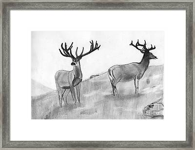 Stag Framed Print by Shashi Kumar
