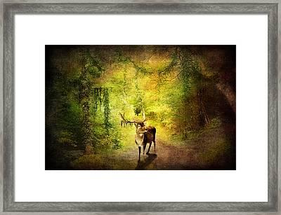 Stag Framed Print by Svetlana Sewell
