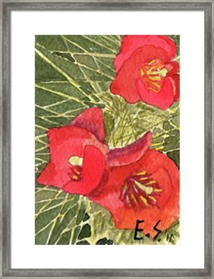 Staghorn Glory Framed Print